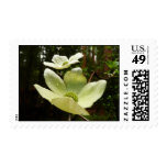 Dogwoods and Redwoods Postage