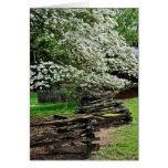 Dogwoods en Tennessee Tarjeton