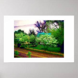 Dogwoods in Dahlonega Poster