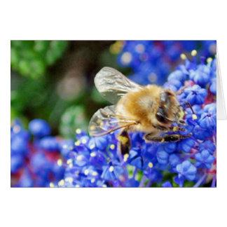 Dohr Street Bee Card