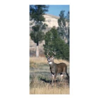 dólar Blanco-atado de los ciervos Lonas