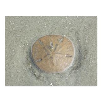 dólar de arena en la foto de la playa por los postales