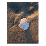 dólar de arena en la playa postal