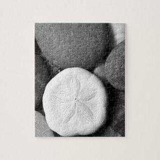 Dólar de arena en rocas de la playa rompecabeza con fotos