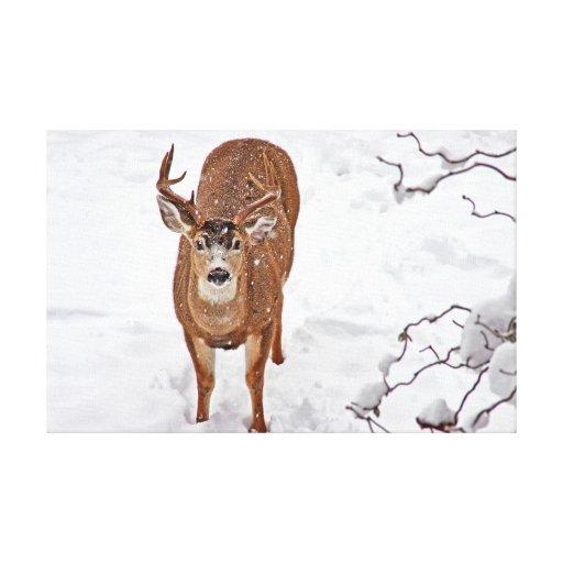 Dólar de los ciervos en nieve del invierno impresión en lona