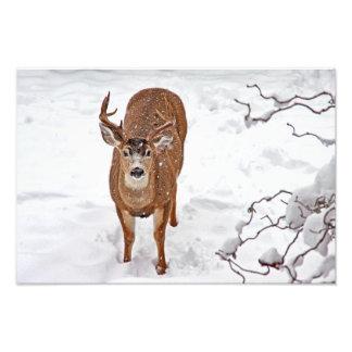 Dólar de los ciervos en nieve del invierno fotografias