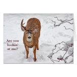 Dólar de los ciervos en nieve del invierno tarjeta de felicitación