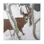 Dólar de los ciervos en nieve en invierno azulejos ceramicos