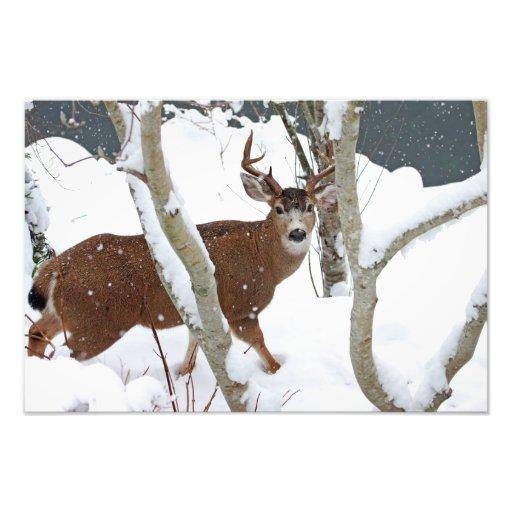 Dólar de los ciervos en nieve impresiones fotograficas