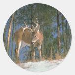 Dólar de los ciervos pegatina redonda