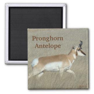 Dólar del antílope de A0044 Pronghorn Imanes
