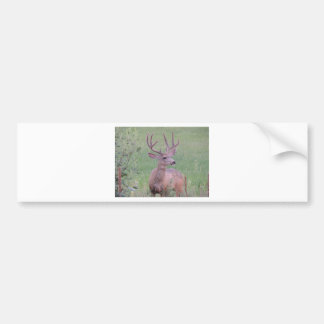 Dólar del ciervo mula etiqueta de parachoque