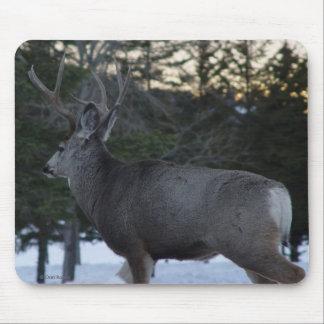 Dólar del ciervo mula D0008 Tapete De Ratón