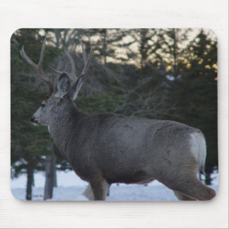 Dólar del ciervo mula D0008 Alfombrilla De Ratón