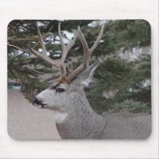 Dólar del ciervo mula D0025 Mouse Pads