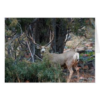 Dólar del estímulo del ciervo mula felicitación