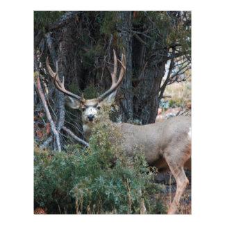 Dólar del estímulo del ciervo mula membrete personalizado