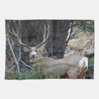 Dólar del estímulo del ciervo mula toallas