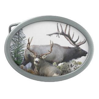 Dólar del trofeo del toro del monstruo hebilla de cinturón oval