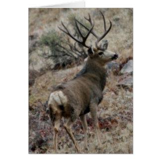 Dólar gigante del ciervo mula tarjetón