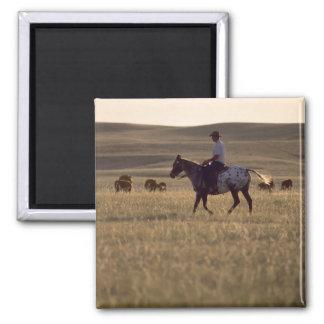 Dólar Holmes del ranchero que monta una mirada del Imán Cuadrado