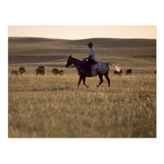 Dólar Holmes del ranchero que monta una mirada del Postal