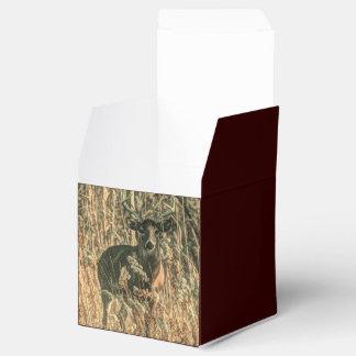 Dólar rugoso de la cola blanca en el bosque caja para regalo de boda