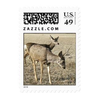 Dólar y gama del ciervo mula sellos