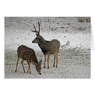 Dólar y gama del ciervo mula tarjetón