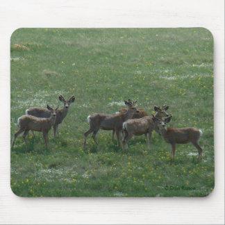 Dólares de la primavera del ciervo mula D0007 Alfombrilla De Ratón