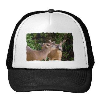 Dólares de los ciervos del amor fraternal gorras de camionero