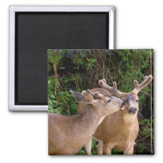 Dólares de los ciervos del amor fraternal imán cuadrado