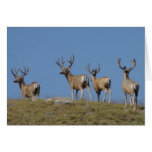 Dólares del ciervo mula D0009 en terciopelo Felicitación