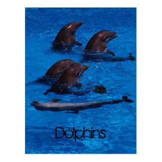 """""""Dolfins"""" by mysteryella Postcard"""
