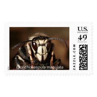 Dolichovespula maculata postage stamps