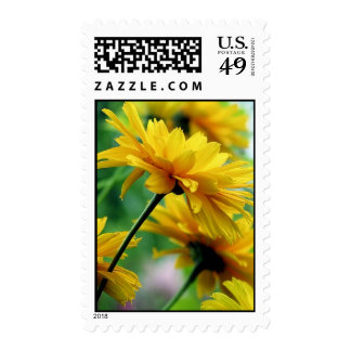 Dollop of Daisies Postage Stamps