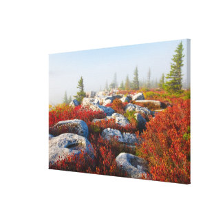 Dolly Sods Wilderness Fall Scenic With Fog Canvas Prints