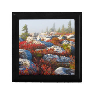 Dolly Sods Wilderness Fall Scenic With Fog Jewelry Box