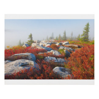 Dolly Sods Wilderness Fall Scenic With Fog Panel Wall Art