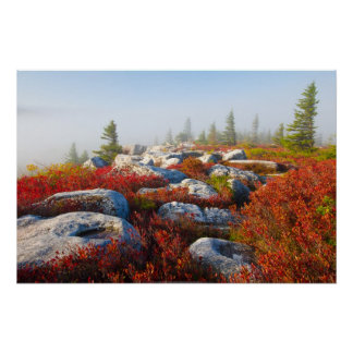 Dolly Sods Wilderness Fall Scenic With Fog Poster