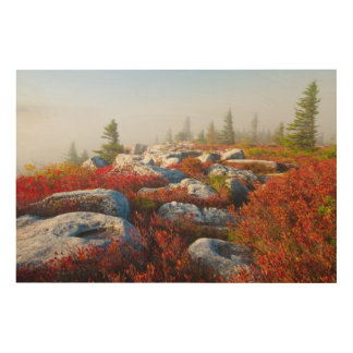 Dolly Sods Wilderness Fall Scenic With Fog Wood Print