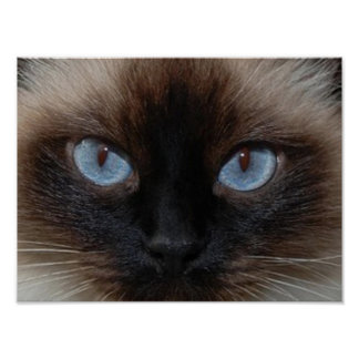 DOLLY THE RAGDOLL CAT POSTER