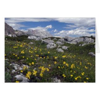 Dolomite wildflowers card