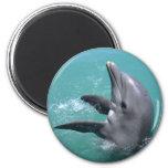 Dolphin1 Imán De Frigorífico