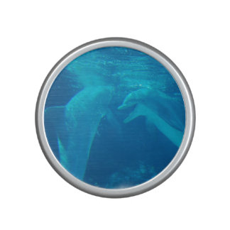 dolphin-100.jpg altavoz bluetooth