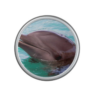 dolphin-16.jpg altavoz bluetooth