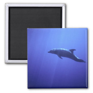 Dolphin 2 Inch Square Magnet