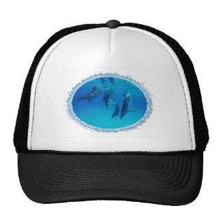 dolphin-6 trucker hat