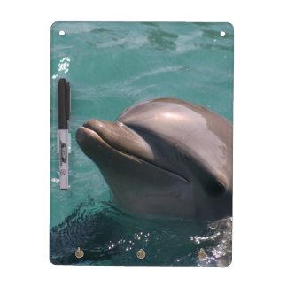 dolphin-7 pizarras