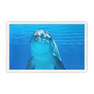 Dolphin Acrylic Tray